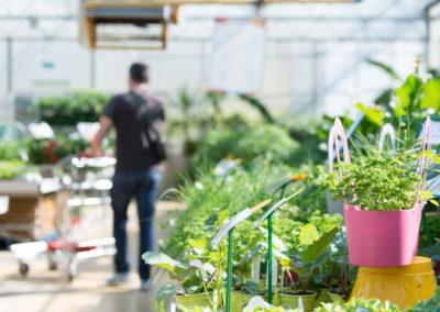 Une jardinerie familiale à proximité de Sommières