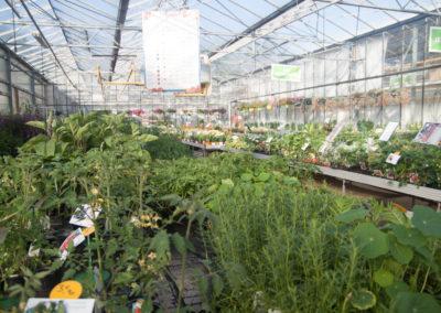 De nombreuses variétés de plants et graines pour le potager