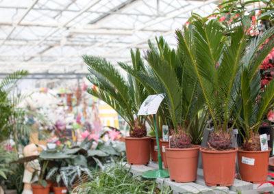 Des plantes tropicales