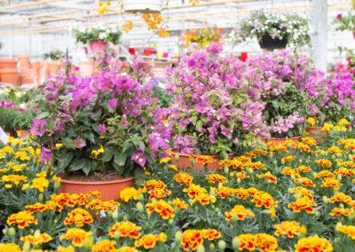 De nombreuses fleurs colorées