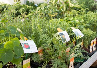 De nombreux plants de fruits et légumes
