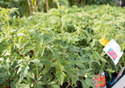 Un grand choix de fruits et légumes pour potager