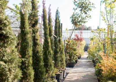 De nombreuses variétés d'arbres et arbustes