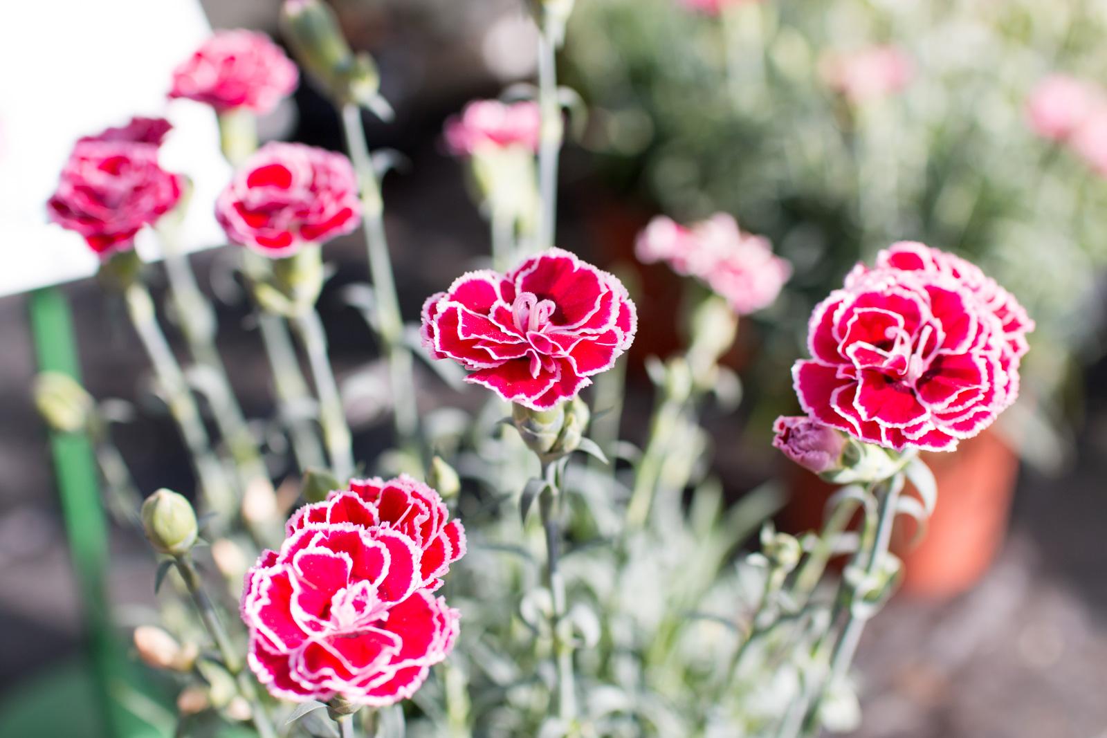 Un jardin coloré grâce à La Terre qui chante