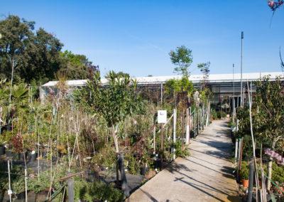 Aménagez vos espaces extérieurs avec notre large choix d'arbres, arbustes, plantes...