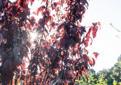 Des arbres et arbustes pour aménager votre jardin