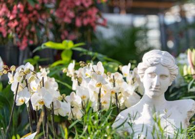De magnifiques orchidées
