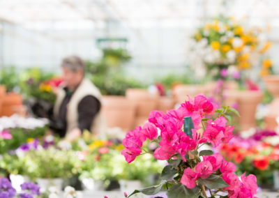 Nombreuses fleurs et plantes