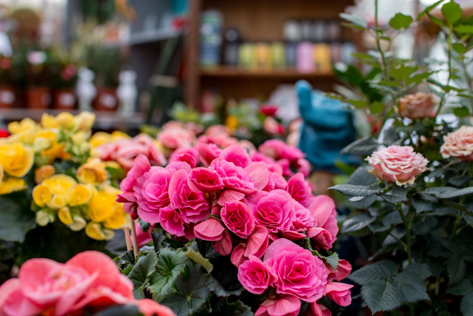Fleurs, plantes, arbustes, arbres fruitiers... tout pour ...