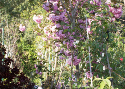 De jolies plantes grimpantes, des arbres fruitiers...