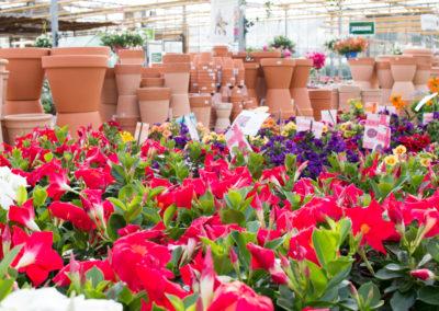 Une multitude de choix pour vos fleurs et plantes