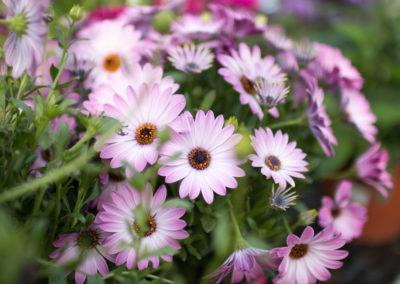 Des fleurs et des plantes pour tous vos projets