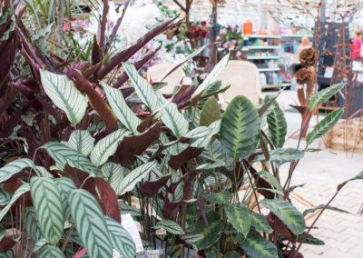 Des plantes d'intérieures et d'extérieures