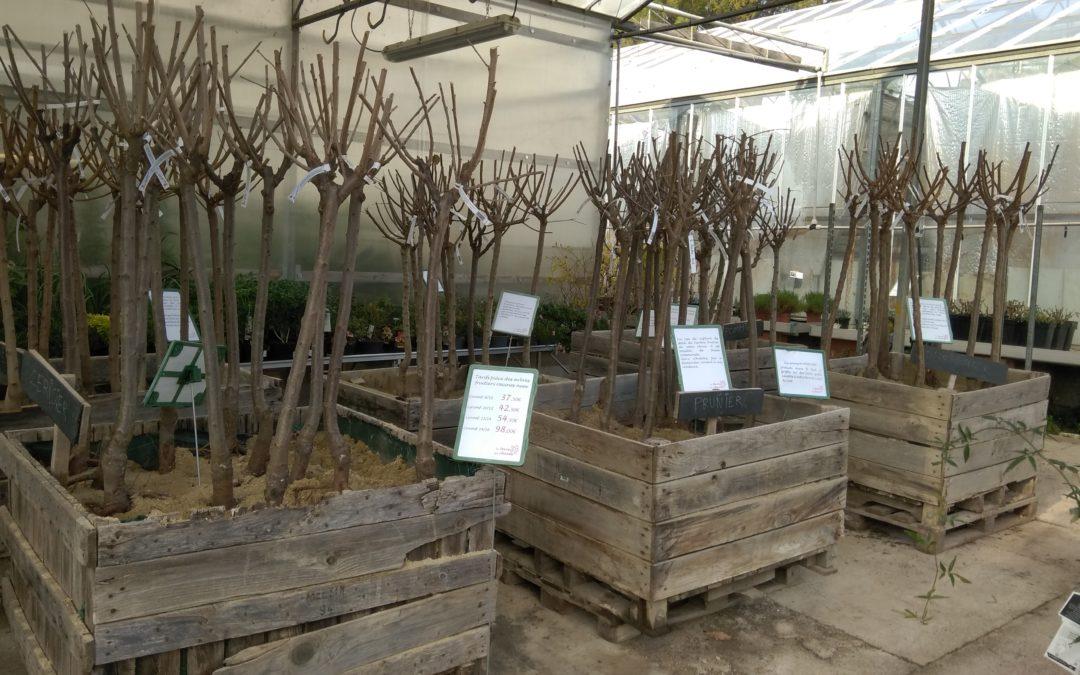 Les arbres fruitiers racines nues reviennent dans votre Jardinerie Pépinière d'Aujargues !
